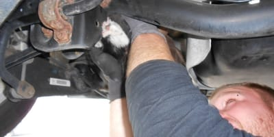Kätzchen unter Auto eingequetscht