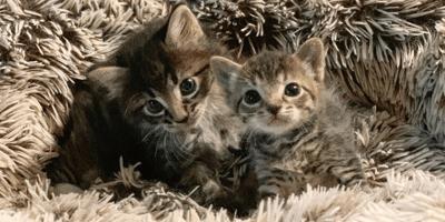 I gattini Barnes e Noble