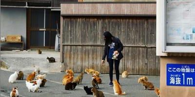 tanti gatti attorno ad una donna