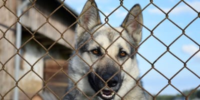 """Un registro telematico di chi """"rinuncia"""" al cane: la proposta"""