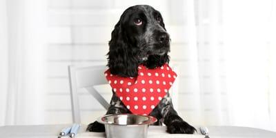 Dieta blanda para perros: cómo prepararla