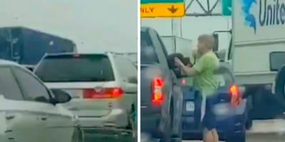 Pies na autostradzie