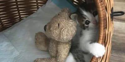 Katzenbaby trauert um toten Bruder: Dann geht Bellas größter Wunsch in Erfüllung!