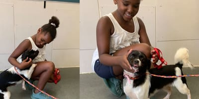 Child greets long-lost dog Zoey