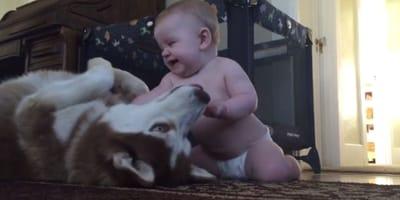 bebe y husky juntos
