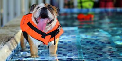 8 piscinas para perros en España: la mejor manera de darse un chapuzón