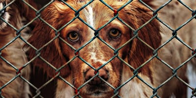 Delaware to pierwszy stan USA, w którym schroniska nie poddają eutanazji zdrowych zwierząt.