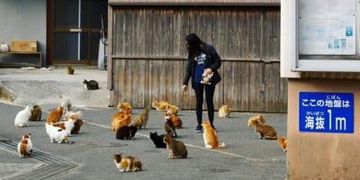 Kobieta karmiąca koty.