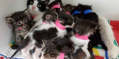 Katze bringt 11 Junge zur Welt