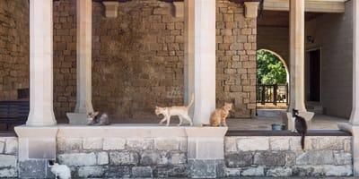 Kot_na_plazy_Cypr