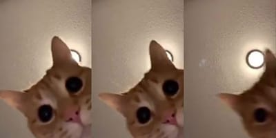 Kot_TikTok_mr.Sandman_viral_video