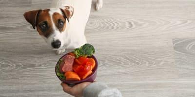 Hund mit Gemüse füttern