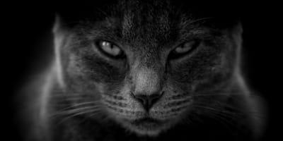 Attacchi di rabbia esplosiva? I gatti potrebbero esserne la causa