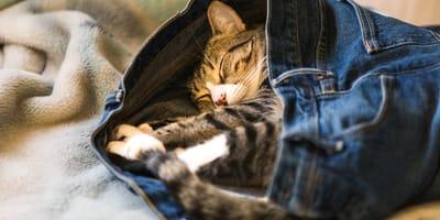Eine Frage der Haltung: Die Schlafpositionen der Katze