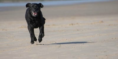 Er geht mit seinem Labrador am Strand spazieren, Stunden später fängt der Alptraum an!