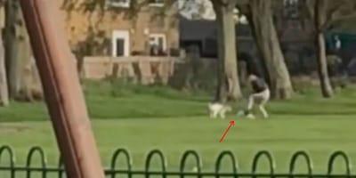Patadas y puñetazos: así  ''cuida'' un paseador de perros de Barcelona a los animales, ¡indignante!