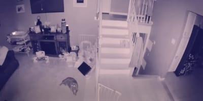 Geistervideo mit Katze