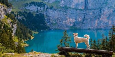W góry z psem - dokąd jechać i jak się przygotować?