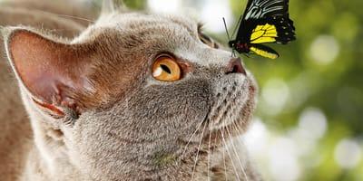 Suchy czy mokry nos u kota? Jaki powinien być?