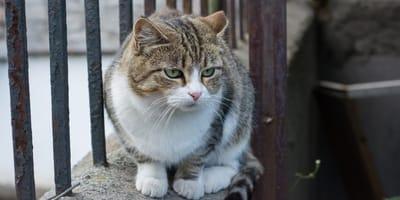 gatto sopra un muretto