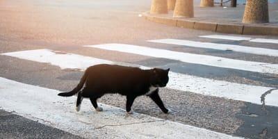 Deshalb bringen schwarze Katzen von links so viel Unheil