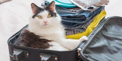 ¿Es posible sedar a mi gato si voy a viajar?