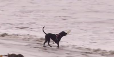 Lleva a su perro a la playa: esta decisión cambia sus vidas para siempre