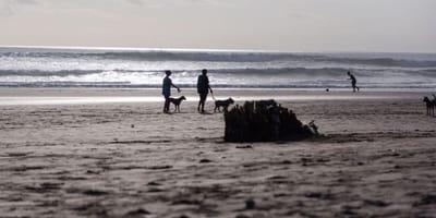 Tourist panics after her Labrador makes shocking beach find