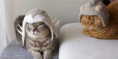 due gatti con cappelli