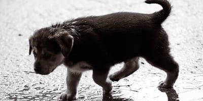 Uragano Dorian: la PETA si rivolge ai padroni di cani e gatti