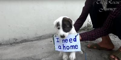 perro abandonado carretera mensaje