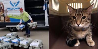 Cats evacuated before Hurricane hits