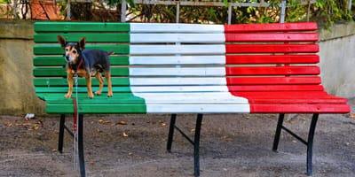 Hund auf italienischer Bank