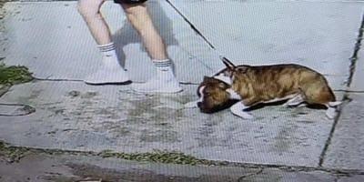 Un uomo maltratta un cane per strada: è caccia al colpevole (Video)