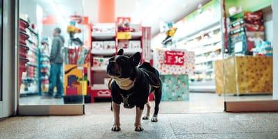 Pies w sklepie
