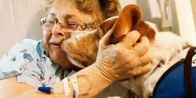 Su perra saltó sobre su pecho y, en ese preciso momento, comprendió que algo no iba bien
