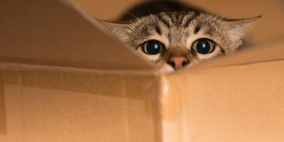 Katze in Umzugskiste