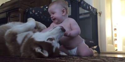 L'emozionante video di un bimbo con il suo Husky