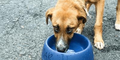 L'appello di un Animal Rescue per salvare i cani dall'uragano Dorian