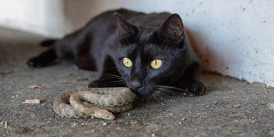 Schlange und Katze