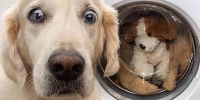 cane sorpreso davanti l'oblò della lavatrice