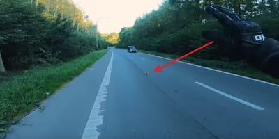 moto frena salvar gato carretera