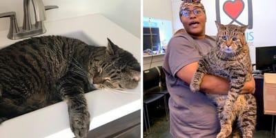 12 kg kot znalazł dom