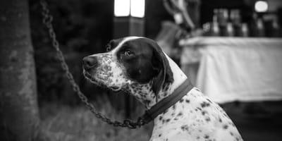 In arrivo un'ordinanza che vieta di tenere i cani legati o in gabbia