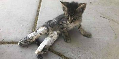 Die ganze Wahrheit hinter dem Kätzchen, das mit zwei Gips-Pfötchen gefunden wurde