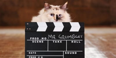 You cat could become Mr Grumbles