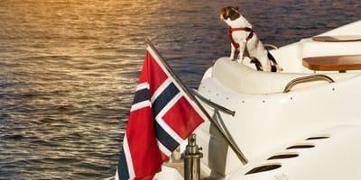 cane su una barca con bandiera