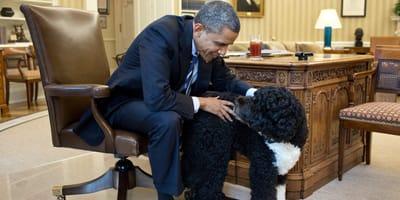 Pies prezydenta Obamy w towarzystwie swojego pana w Gabinecie Owalnym