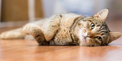 Neun Signale von Katzen, die jeder von uns kennen muss