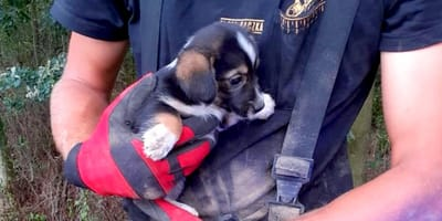 Uratowany szczeniak na rękach strażaka